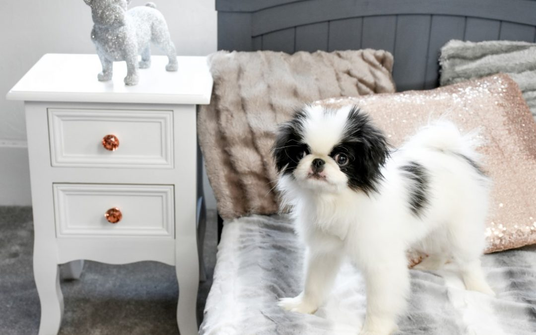 Pet Hotel launching in Hampton in Arden